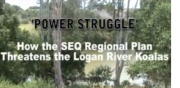 power-struggle-koalas-LoganR